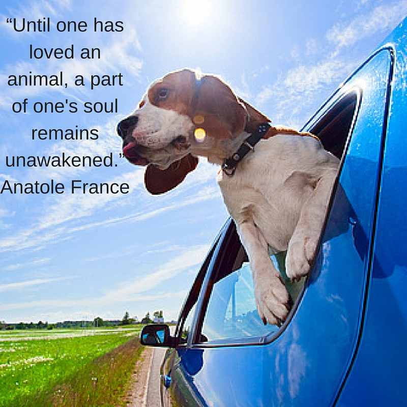"""Until one has loved an animal, a part of one's soul remains unawakened."" ― Anatole France (1)"