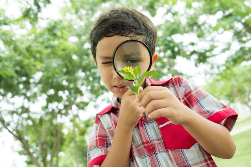 Niño explorador