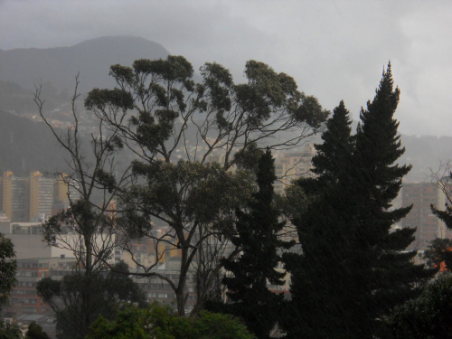 Árboles Bogotá